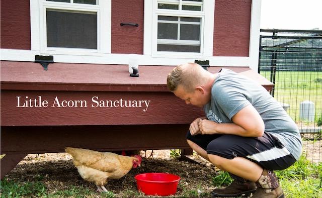 Meet the Animals – Little Acorn Sanctuary